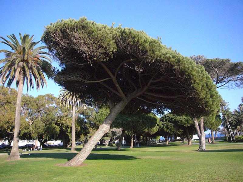 Point Fermin Park