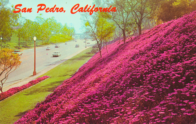 "Back of post card reads ""San Pedro, California. A portion of Leland Park in San Pedro can be seen. This park is typical of the beautiful area in which San Pedro is located. From the SanPedro.com post card collection"