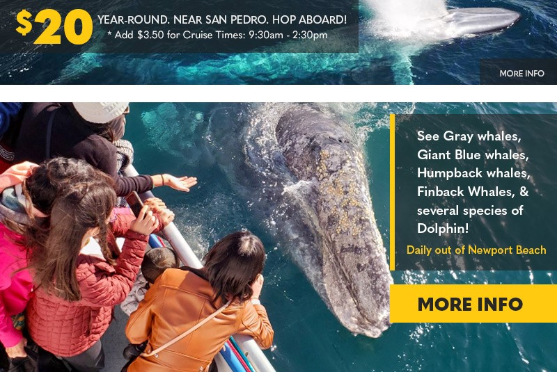 See whales daily out of Newport Beach. $20 year-round